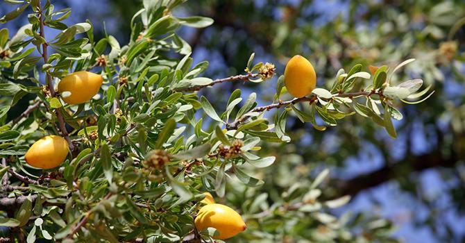 Los nutrientes Esenciales que aporta el Aceite de Argán a tu Pelo