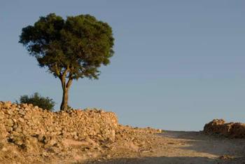 ¿Está desapareciendo el árbol de Argán?
